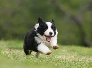 enthusiastic puppy